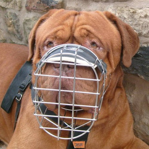 Dogue De Borderux Muzzles UK