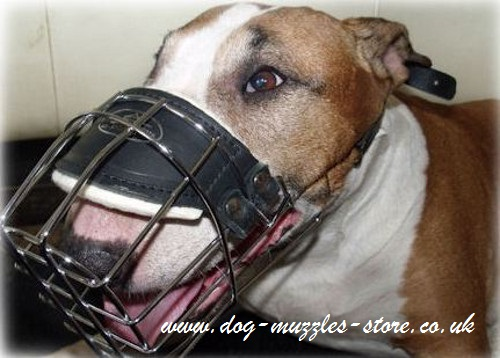 wire basket muzzle for dogs