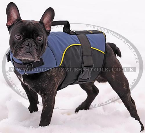 Buy French Bulldog Clothes: Warm Dog Harness with Carry Handle