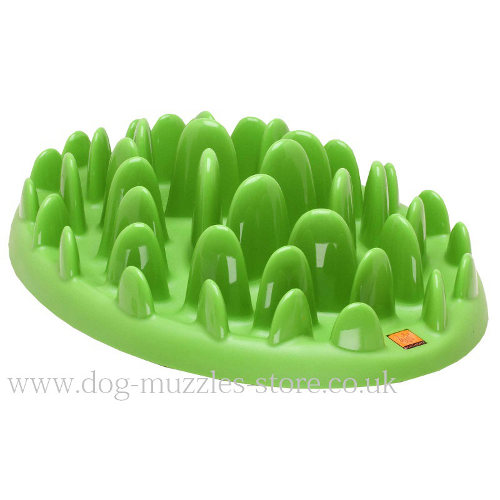 NEW Dog Feeder for Small and Medium Dogs - Treat Dispenser
