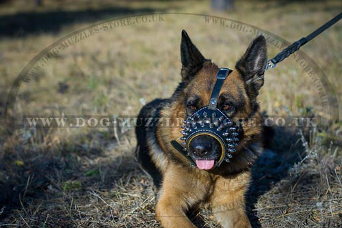Gladiator Style Designer Dog Muzzle for German Shepherd