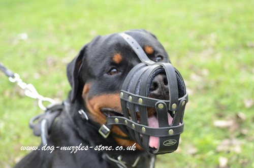 Leather Dog Muzzle UK for Large Dog Breeds Like Rottweiler - Click Image to Close