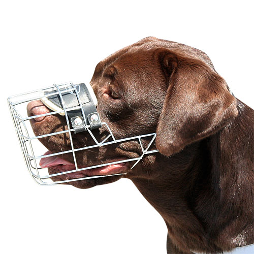 Labrador Dog Wire Muzzle | Wire Dog Muzzle for Labrador