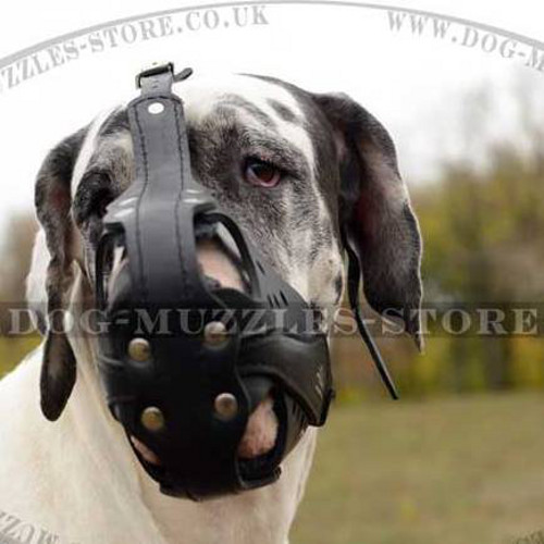 Large Dog Muzzle for Great Dane | Dog Muzzles for Sale