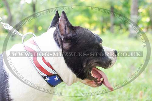 "Leather Dog Collars with Painting ""American Pride"" for Amstaff"