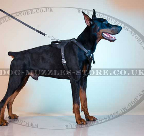 Leather Dog Harness for Walking and Training | Dog Harness UK