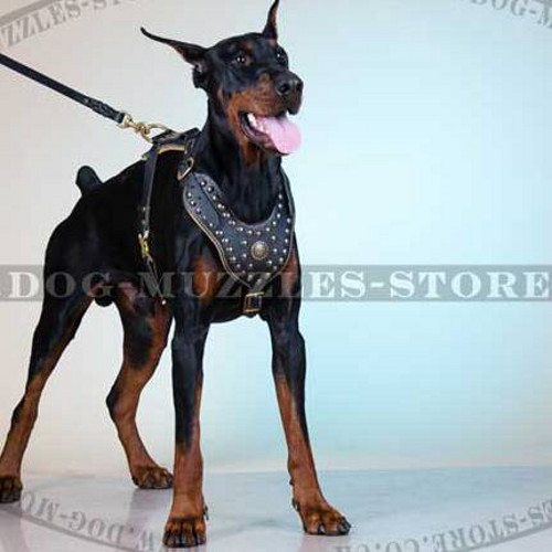 Best Dog Harness with Studs and Padding | Large Dog Harness