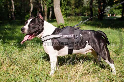 Nylon Dog Harness With Handle For Amstaff