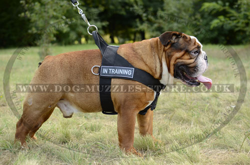 English Bulldog Harness to Stop Pulling on the Leash BestSeller