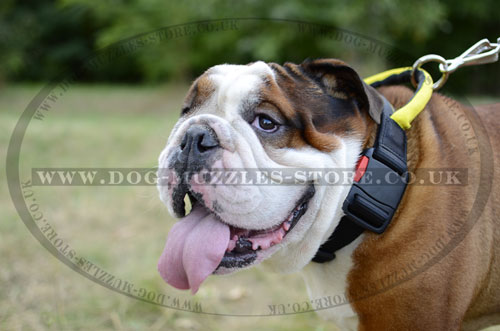 Extra Strong Nylon Dog Collar for English Bulldog