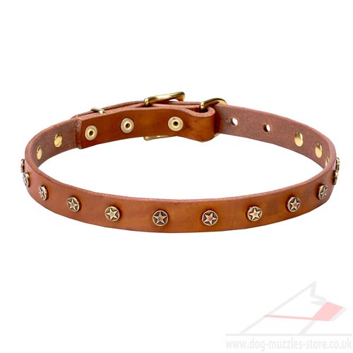 Puppy Collar UK New Collection in Stellar-Studded Style
