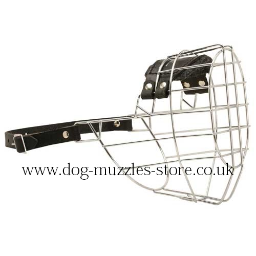 Dog Muzzle Size for Rottweiler and Cane Corso Dog Breed