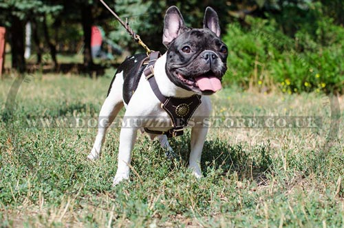Gorgeous Dog Harness for Cute Frenchie Comfort and Style
