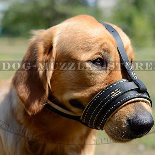 Soft Dog Muzzle Nappa Padded | Golden Retriever Muzzle UK