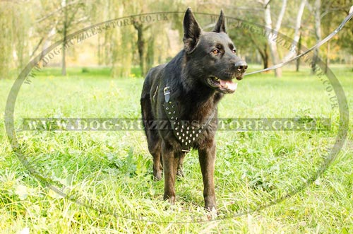 Glancing Spiked Designer Dog Harness | German Shepherd Harness