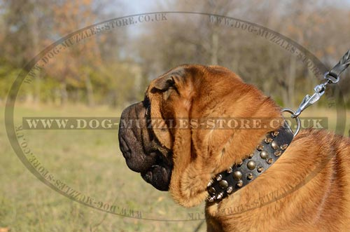 Black Leather Dog Collar For Shar Pei UK