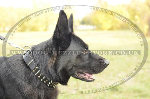 Leather Collar for German Shepherd with Spikes and Studs