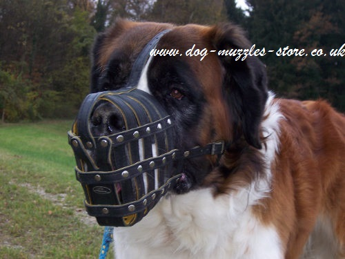 St Bernard Muzzle Best Choice for Big Dog Breeds, Daily Use - Click Image to Close