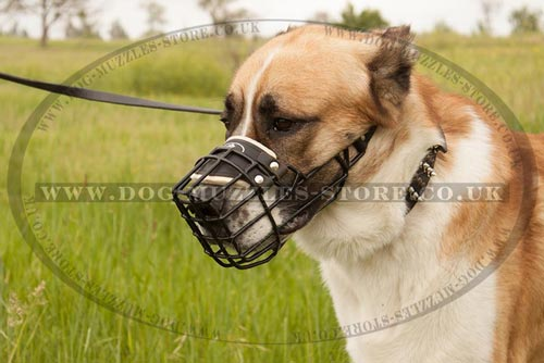 Rubber-Covered Dog Basket Muzzle for Alabai and Big Shepherd Dog