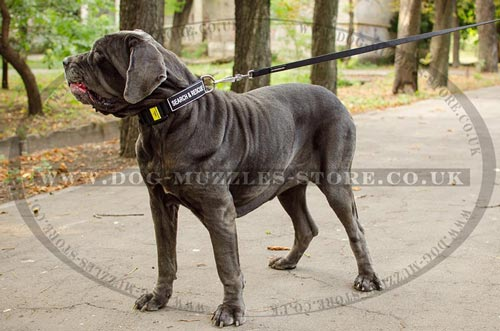 Strong Dog Training Collar for Large Dogs Like Mastiffs