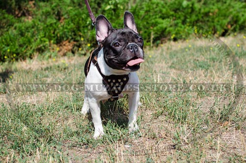 Leather Dog Harness for French Bulldog with Pyramids