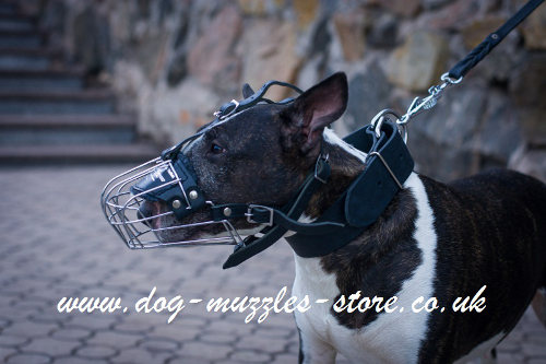 Basket English Bull Terrier Muzzle UK with Perfect Ventilation