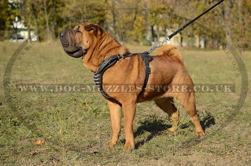 Splendid Spiked Leather Dog Harness for Sharpei Dogs