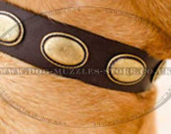 Leather Dog Collar for Dogue De Bordeaux Gorgeous Style!
