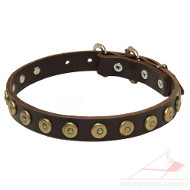 Leather Dog Collar Brass Studded | Small Dog Collar UK