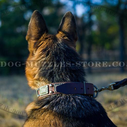 Exclusive Leather Dog Collar for German Shepherd