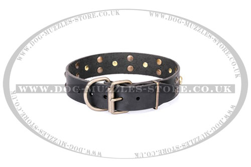 leather pirate dog collar by Artisan