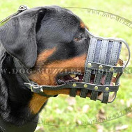 Soft Padded Dog Muzzle Leather Basket for Rottie