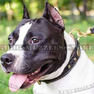Luxury Dog Collar UK | American Staffordshire Terrier Dog Collar