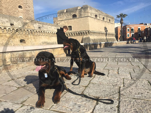 2 dog lead for Rottweilers buy online