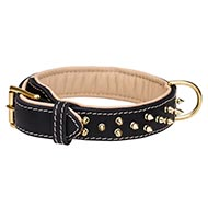 Soft Padded Leather Dog Collar | Luxury Spiked Dog Collar
