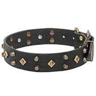 Royal Dog Collar for Your Gorgeous Dog!