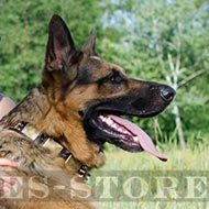 Gorgeous Dog Collar Design For German Shepherd