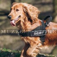 The Best Dog Harness for Spaniel to Stop Dog Pulling