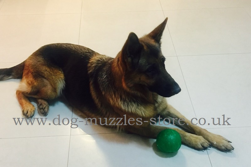 Large Toy Dogs : Indestructible dog toys large for treats games