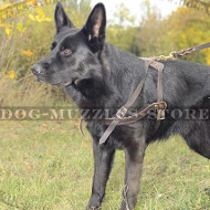 The Best Choice to Buy German Shepherd Harness for Dog Sport