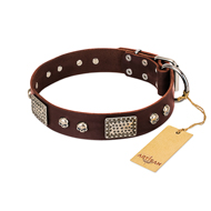 Beautiful Brown Dog Collar FDT Artisan 'Pirate Skull'