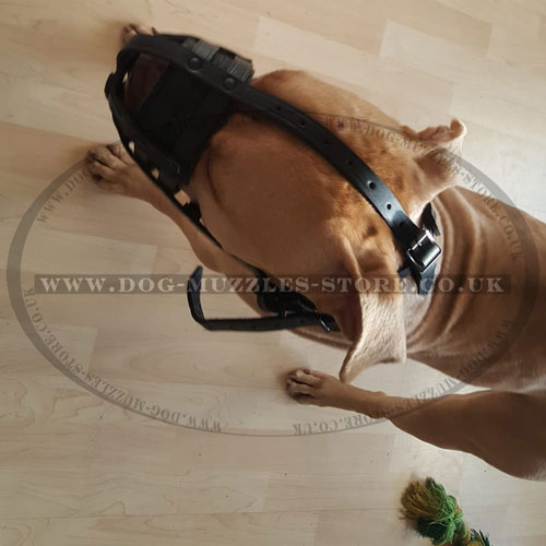 choose pit bull muzzle online UK
