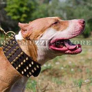 Pit Bull Terrier Collar Wide Leather | Spiked Dog Collar Large