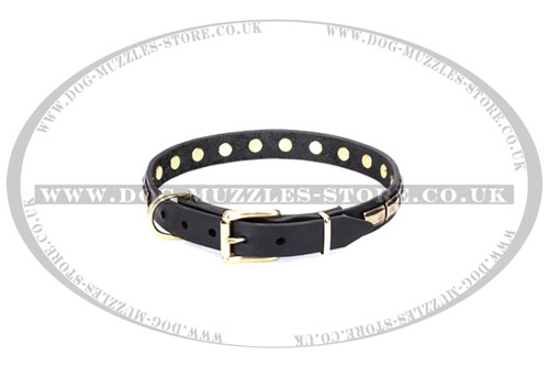 large dog collar metal buckle Artisan UK