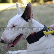 Quick Release Nylon Dog Collar for Bull Terrier Size