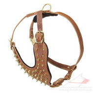 Royal Dog Harness with Brass Spikes | Large Dog Harness