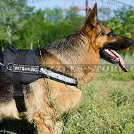 German Shepherd Harness with Reflective Trim and Sign Patches