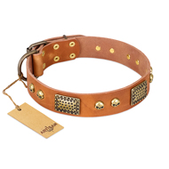 New Leather Dog Collar FDT Artisan Saucy Nature
