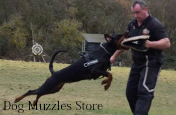 Dog Biting Training Equipment