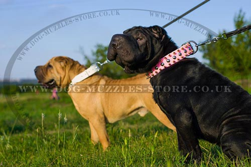Shar Pei Leather Dog Collars Pink And White